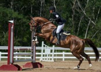 Беременность и верховая езда