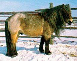 Ячмень для лошадей